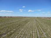 Morehead Dryland & CRP