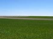 Ackerman Organic Dryland & Pasture