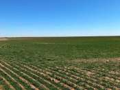 Box Butte County Dryland & Pasture
