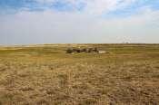 Hughes CRP & Pasture